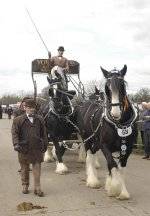 Youngs Shire Horses